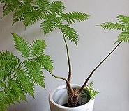 花アンジェ・観葉植物